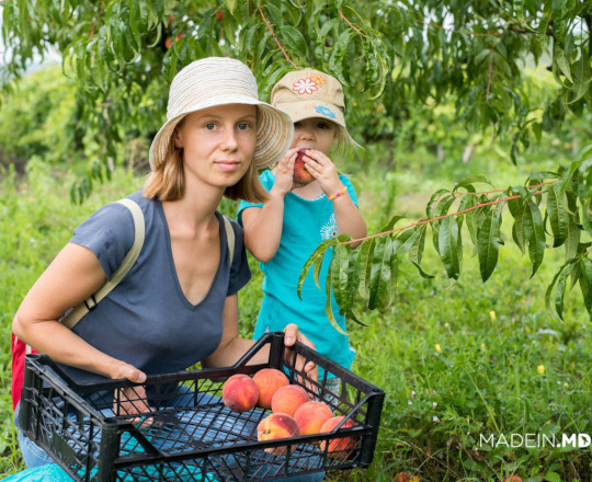 Pick Your Own — an International Practice, Implemented for the First Time in Moldova